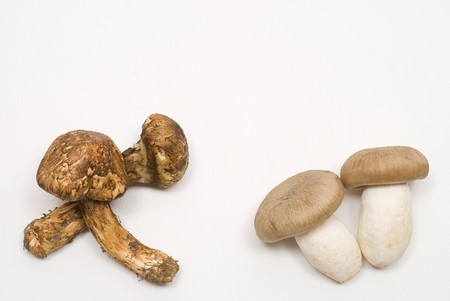 Two kinds of mushroom on a white background photo