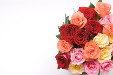rosas naranjas: Rosa color sobre un fondo blanco