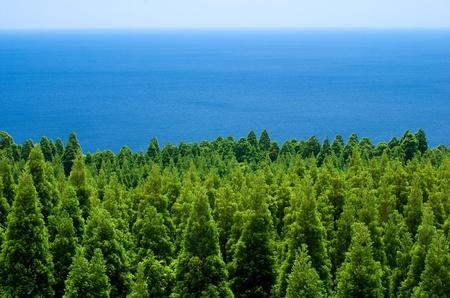 針葉樹と宮崎県都井岬から海