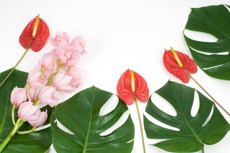 Tropical leaves and tropical flowers Stock Photo - 9127655