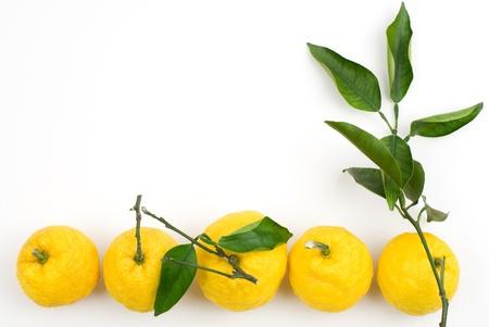 白い背景の上の柚子