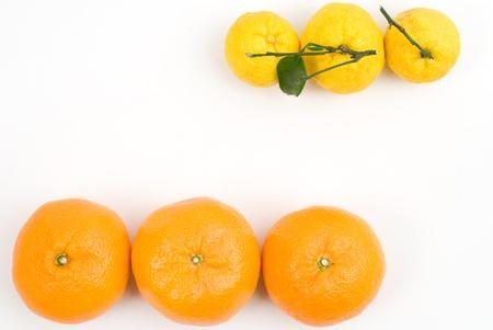 Citrus Unshiu(Mikan) and Yuzu