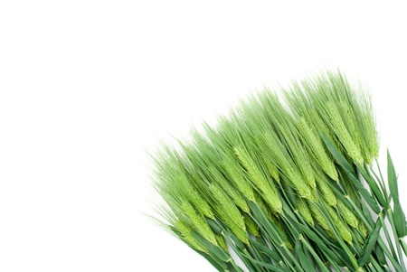 Six row barley on a white background