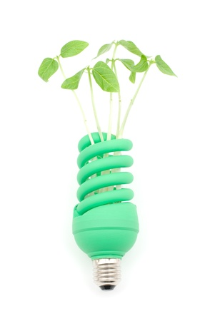 Sprout and green light bulb on a white background photo
