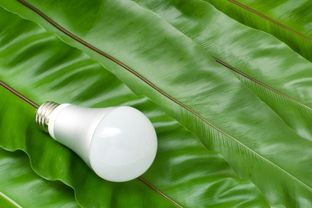 fern: LED light bulb on the green fern leaves