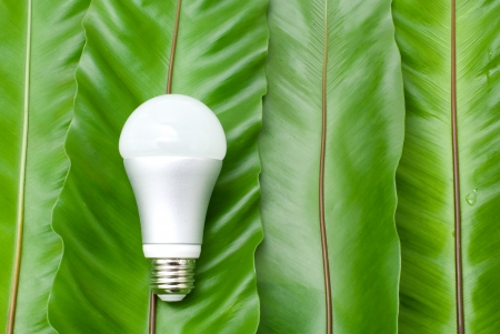 LED light bulb on the green fern leaves photo