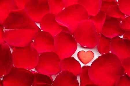 all one: One heart in rose petals all over background