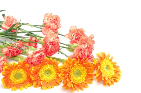 rimmed: Bouquet of red rimmed orange carnation and african daisy on white background