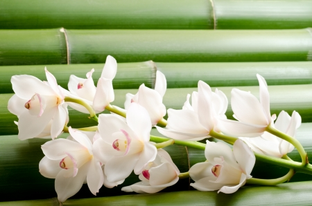 White orchid flowers on a tightly arranged large bamboo background photo