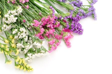 diagonally: Wavy leaf sea lavender flowers lined up diagonally in the upper left corner