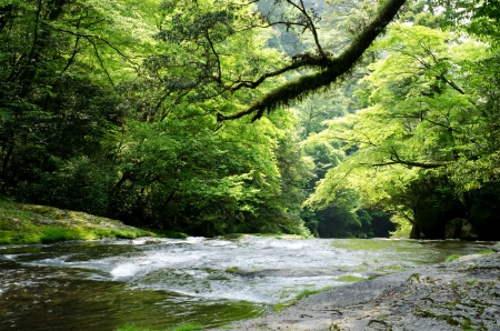 early summer: Flow of river and green hardwood forest in early summer Stock Photo