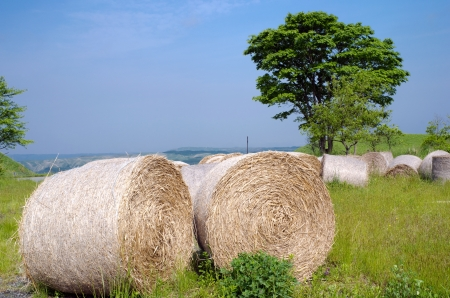Hay bale roll on the green field under blue sky photo