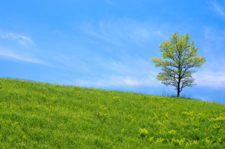 One oak tree in the grassy plain under blue sky in early summer photo