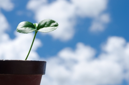 welling: Potted citrus bud and welling up clouds in the sky Stock Photo