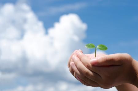 welling: Sprout in mano e cielo di nuvole che zampilla