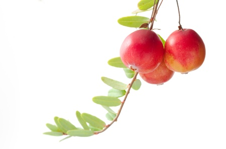 cranberry fruit: Harvest season of cranberry fruit and branch on white background