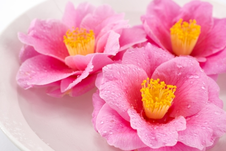 Close up of three camellia flowers in the dish photo