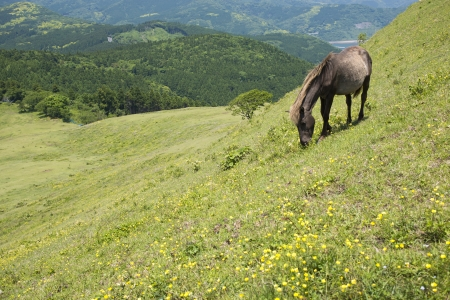 sward: Grazing horse on the green sward of hillside Stock Photo