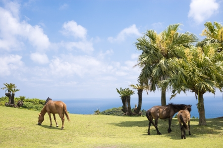 sward: Horses on the sward of seashore under sky and floating clouds Stock Photo