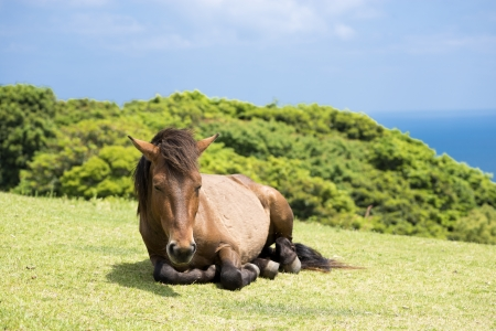 sward: One horse sitting on the sward of seashore