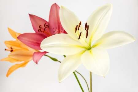 diagonally: Three colors of lily flowers lined diagonally Stock Photo