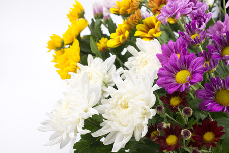 diagonally: Lot of colorful chrysanthemum flowers which arranged diagonally