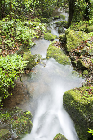 vertical composition: White small brook flowing among the mossy stones in vertical composition