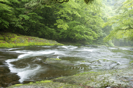 limpid: Limpid stream flowing over the gentle slope in green forest