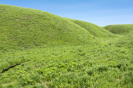 undulating: Bright green undulating hills under blue sky
