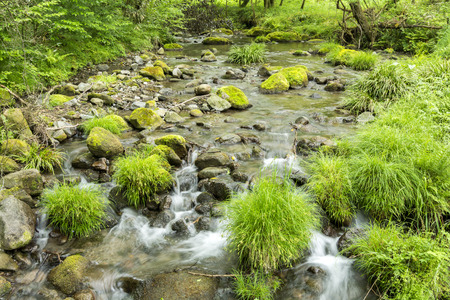 clean water: Lush green brook flowing among the stones