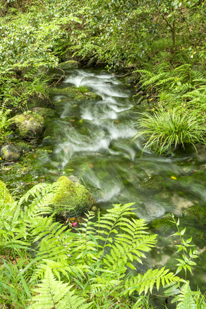 vertical composition: High transparency brook that lush green aquatic plants in vertical composition