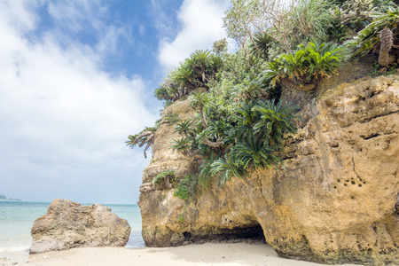 subtropics: Fern palm growing in coastal cliff under sky Stock Photo