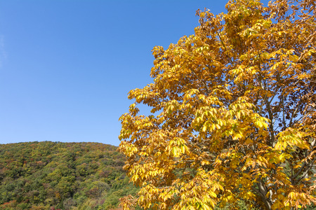 autumn horse: Autumn Horse chestnut leaves in front of hill under blue sky
