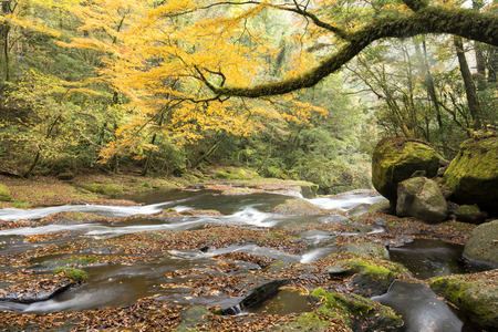 primeval: Gentle river flowing in autumn color primeval forest Stock Photo