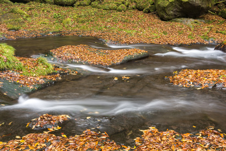 bedrock: River flowing on the fallen leaves piled up bedrock in late autumn
