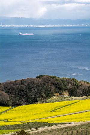 cole: Tanker floats sea and cole flower field from Awaji island