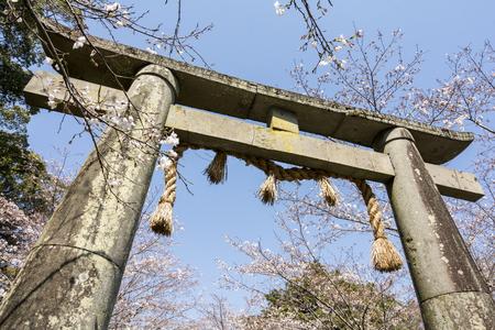 saga: Shinto at the shrine gate and yoshino cherry blossoms under blue sky in Ogi, Saga