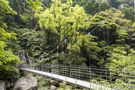 primeval forest: Suspension bridge over rivine in front of primeval forest Stock Photo