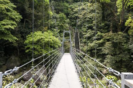 primeval forest: Suspension pedestrian bridge leading toward primeval forest