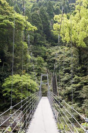 primeval forest: Suspension bridge leading toward primeval forest in vertical composition