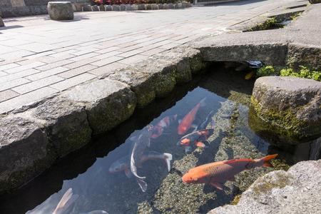 brink: Colored carp swim a water passage of roadside in Shimabara, Nagasaki