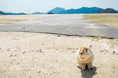 A rabbit sitting on a sandy ground looking at front in Ookuno island