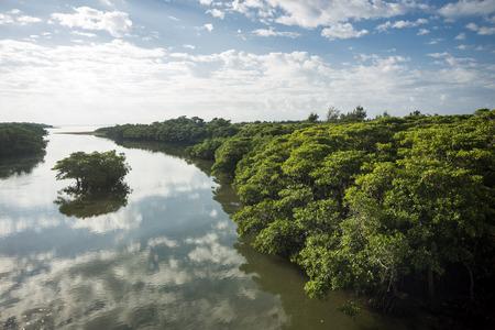 Morning Miyara river beside mangrove under sky in Ishigaki island