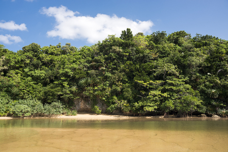River and green jungle under blue sky in Ishigaki island