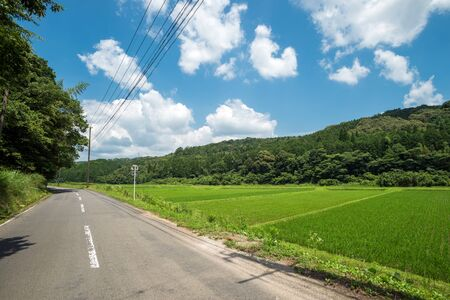 Rural pavement road beside green paddy field under clouds floating sky in summer