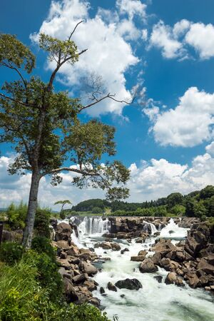 Waterfall falling from several places and joins the river side of tall tree under blue sky
