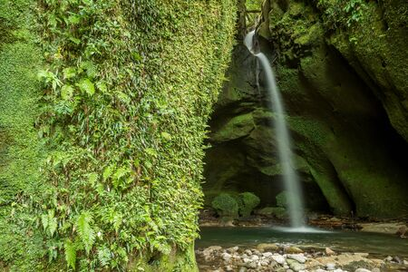 White narrow waterfall in back of green fern growth rock cliff Imagens