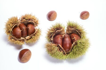 Two ripe chestnut burrs and fruit on a white background