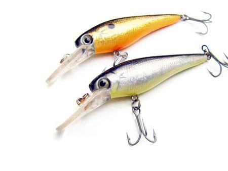 fishing bait to catch perch