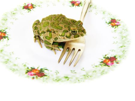 crawler: a toad is in a dish